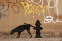 1. Banksy's month-long show on the streets of New York, compete with video guide